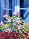 Geraniums and Ivy in Window version 3